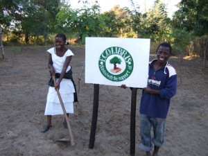 ecolibris planting trees in africa