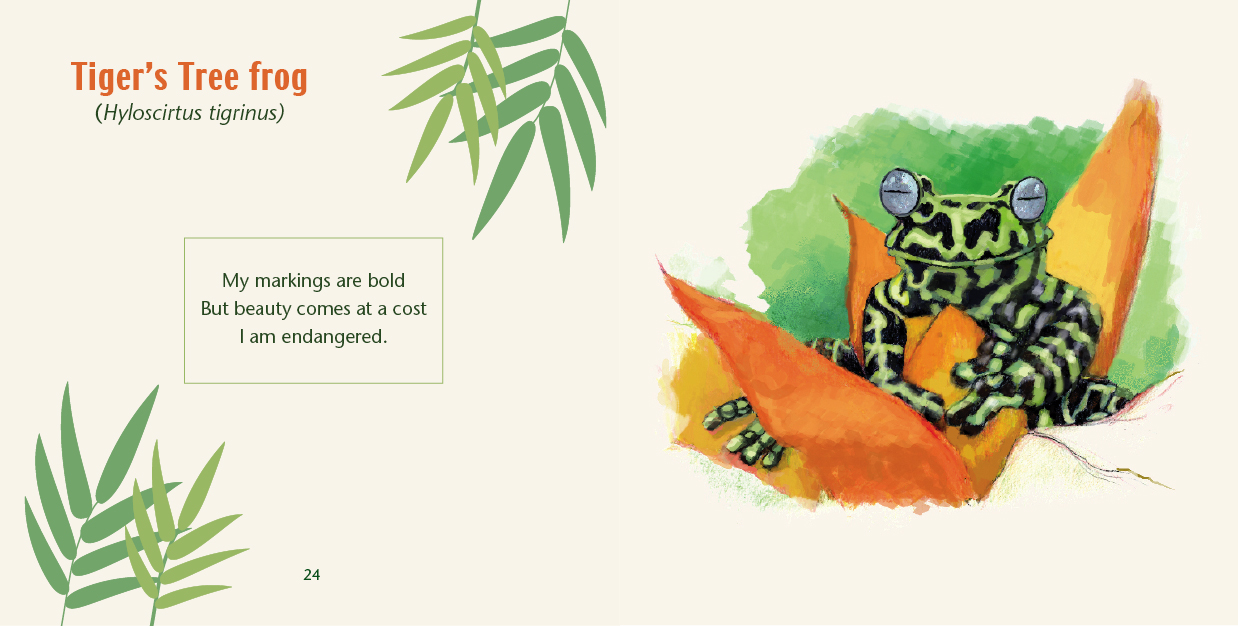 Tiger's Tree frog illustrated by Mark Lerer for Rainforest Frogs book