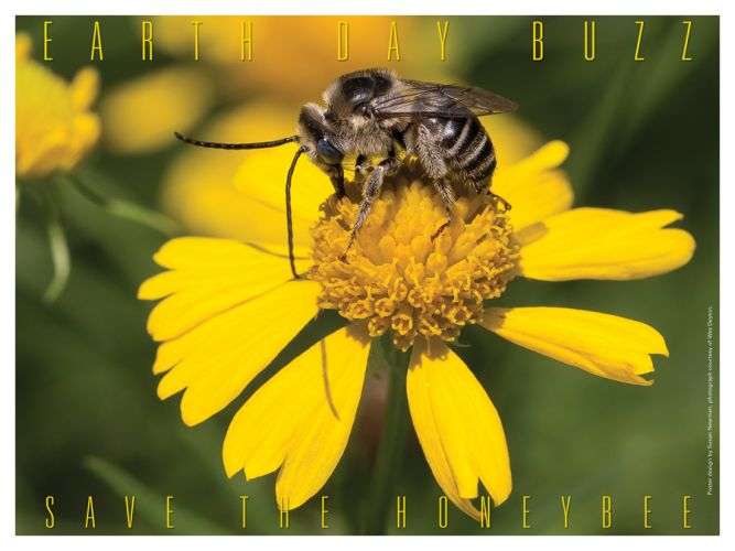 Save The Honeybees - Earth Day Poster - Photo by Wes Deyton, Design by Susan Newman