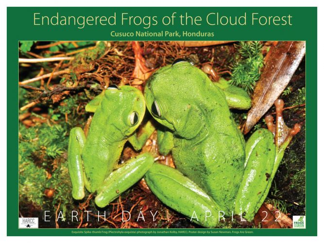 Endangered-frogs-Cloud-Forest-1200px