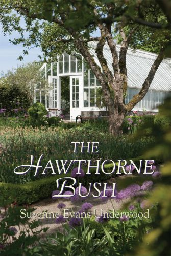 Hawthorne Bush by Suzonne Underwood