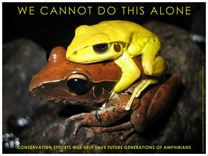 Frog Conservation Poster - We Cannot Do this Alone - award winner Graphic Design USA