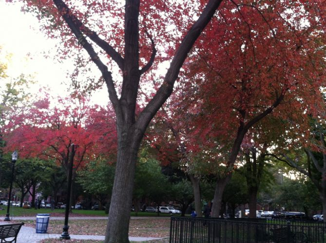 red-green-trees-hamilton-park